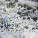 How to Protect Your Lawn and Garden This Winter